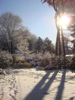 Sony DSLR Contest - Winter by carolineleusnerx