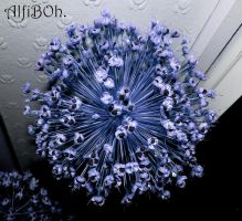 Blue explosion.. by AlfiBOh