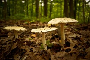 Shrooms by angelsfalldown1