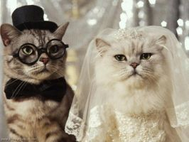 Newly Wed Couple by diggwallpapers