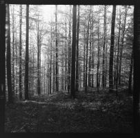 black forest in black and white - 2 by VooDooMania