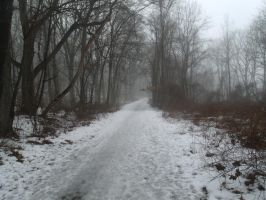 And Through the Woods 4: The Path by LooseId