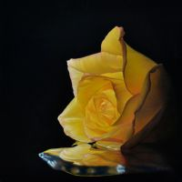 Yellow Rose 1 by deRaat