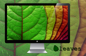 Leaves Wallpaper Pack by miguelsanchez666