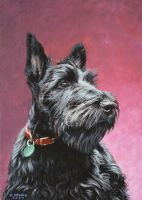 Scottish Terrier puppy by NewAgeTraveller
