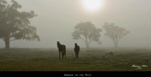 Horses in the Mist by FireflyPhotosAust