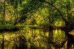 Fisher Swamp II HDR by joelht74