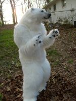 Aurora polar bear by Thundolis