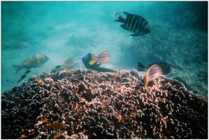 Reef fish 1 by wildplaces