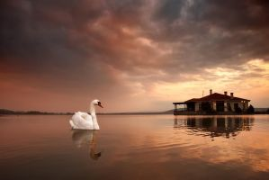 Swan lake by Chris-Lamprianidis