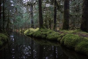 Secluded Pond by Omegacetacean