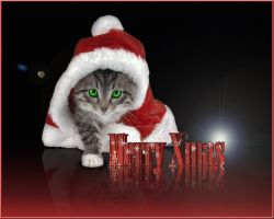 Xmas Cat by LG-Design