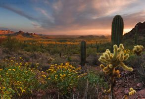 Sonoran vista by PeterJCoskun