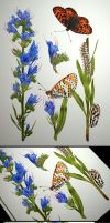 Echium and melitaea - finished by Shelter85