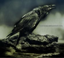 The crow in the rain. by tianne666