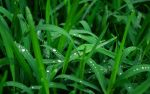 Droplets on Grass by jonathondeans