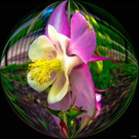 Flower Bubble by tripptaylor
