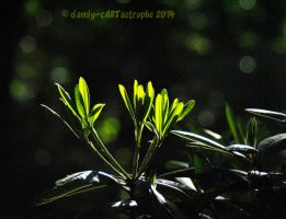 Shades Of May 51 by dandy-cARTastrophe