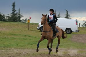 Chestnut Warmblood Gelding Cross Country Eventing by HorseStockPhotos