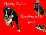 Agility Trainer by Solembumer