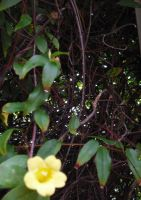 Knotted Branches and Flower by Daato-Omata