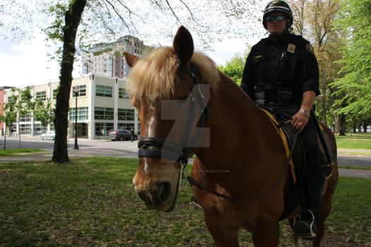 Portland 11 -Mounted Cop by Blood-Red-Crystal