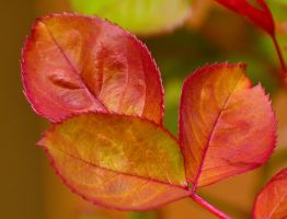 Leaf Colors 3-7-11 by Tailgun2009