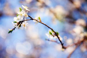 Spring is coming - D296 by neoflo