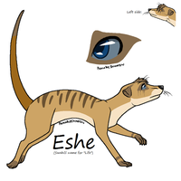 Eshe the Meerkat by 3933911