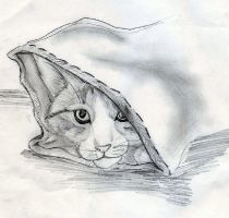 Cat in a Bag by IKilledSociety