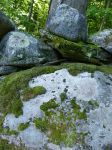 Moss Rocks by nonverbalexpressive