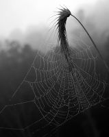 Morning Web by Logicalx
