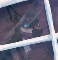 ACCL-The Window by Pepperjay