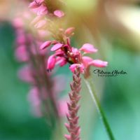 In The Blur by t-R-i-S-h