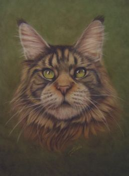 Maine Coon cat in pastels by chipset