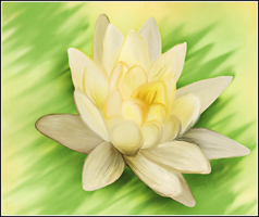 waterlily by juggsy