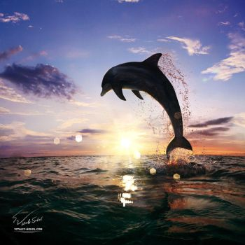 Beautiful-sunset-dolphin-jumping-130814 by Vitaly-Sokol