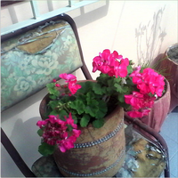 Pink flowers in a flower pot. by MoonShu