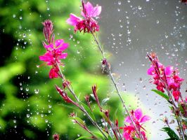 pink, green and drops by percya93