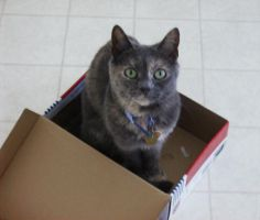The Cat in the Box by xihearthe80sx
