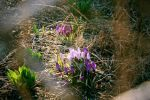 Signs of Spring I by Uncaged