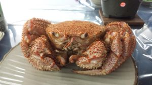 Horsehair crab by RiverKpocc