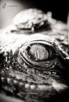 Baby Crocodile Eye by fahadee