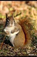 Squirrel_6373 by MASOCHO