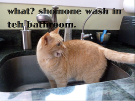 LOLCat in the Sink by WarriorCatLuver123