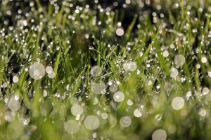 dew point by swandundee