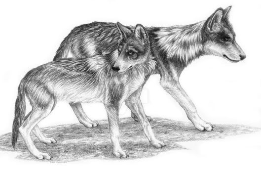 Mexican Grey Wolves by LisaCrowBurke