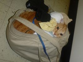 Cat Carrier by usedbooks