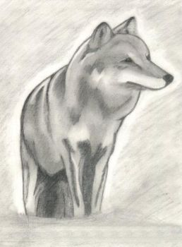 Wolve by Ameria