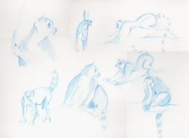 Lemur studies by blargberries